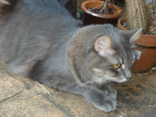 Mimi in garden
